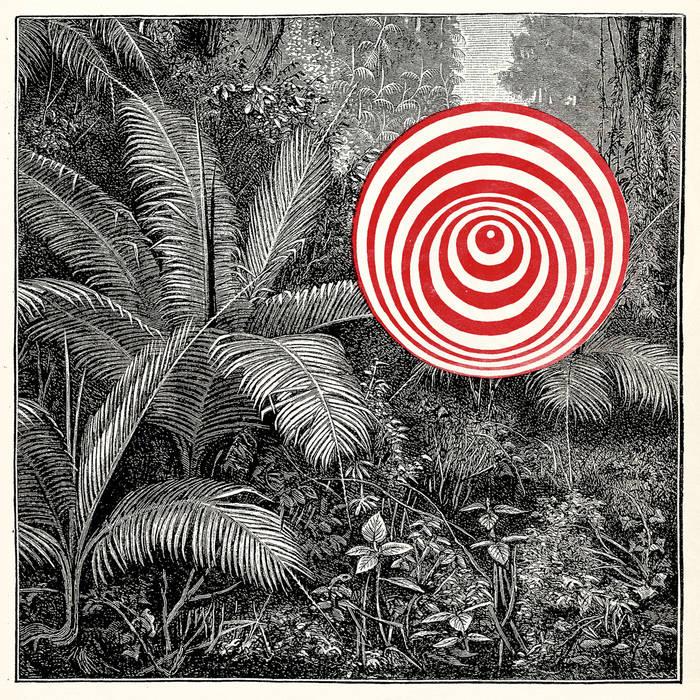 GORAN KAJFEÅ - Goran Kajfes Tropiques : Into the wild cover