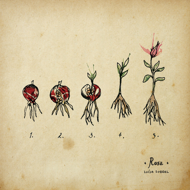 LUÍSA SOBRAL - Rosa cover