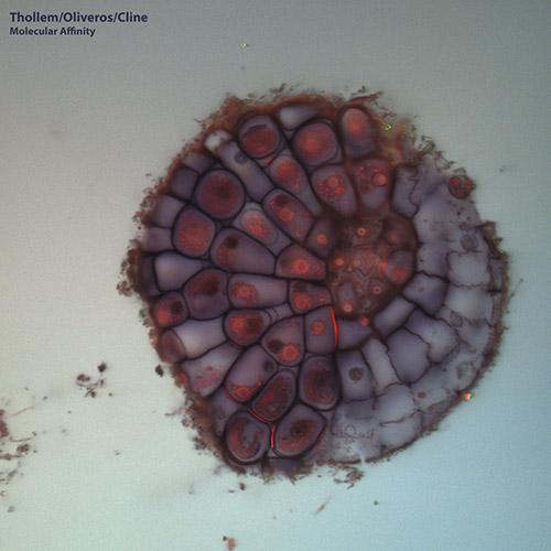 THOLLEM MCDONAS - Thollem / Oliveros / Cline : Molecular Affinity cover
