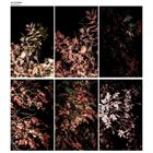ARVE HENRIKSEN Solidification album cover