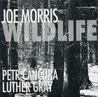 JOE MORRIS Wildlife album cover