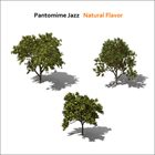 PANTOMIME JAZZ Natural Flavor album cover