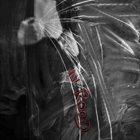 ARANIS In Rood album cover