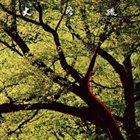 HOZAN YAMAMOTO Daiginjo album cover