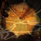 PRISMATIC MANTIS Umbrella album cover