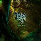 TAYLOR EIGSTI Tree Falls album cover