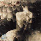 TONY WILLIAMS Angel Street album cover